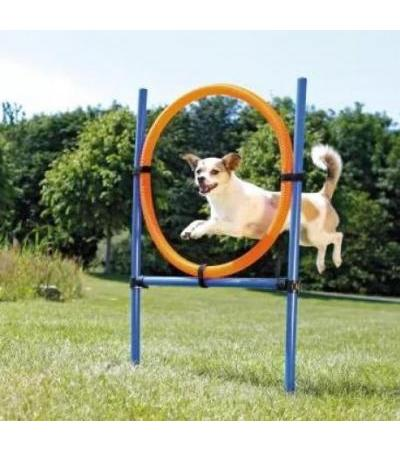 Trixie  Agility Ring